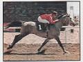 WMA PRIZTIN #387810 (*Maligg x *Prizmaa, by *Rusazcie) 1987 grey stallion bred by Welcome Mountain Arabians