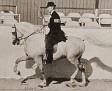 SUR-BUDDI+ #17811 (Sureyn x Jubilee, by Jubilo) 1960 grey stallion bred by James Draper; sired 43 registered purebreds