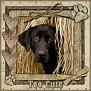dcd-Too Cute-In The Hay