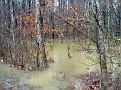 Flood 018