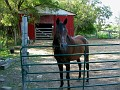 Horse, Farm