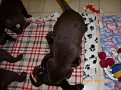 March 18 2012 Callie pups (7)