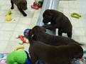 March 18 2012 Callie pups (70)