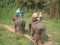 Mae Ping Elephant Camp near Chiang Mai in Northern Thailand Day 12 Feb 23-2006 (49)