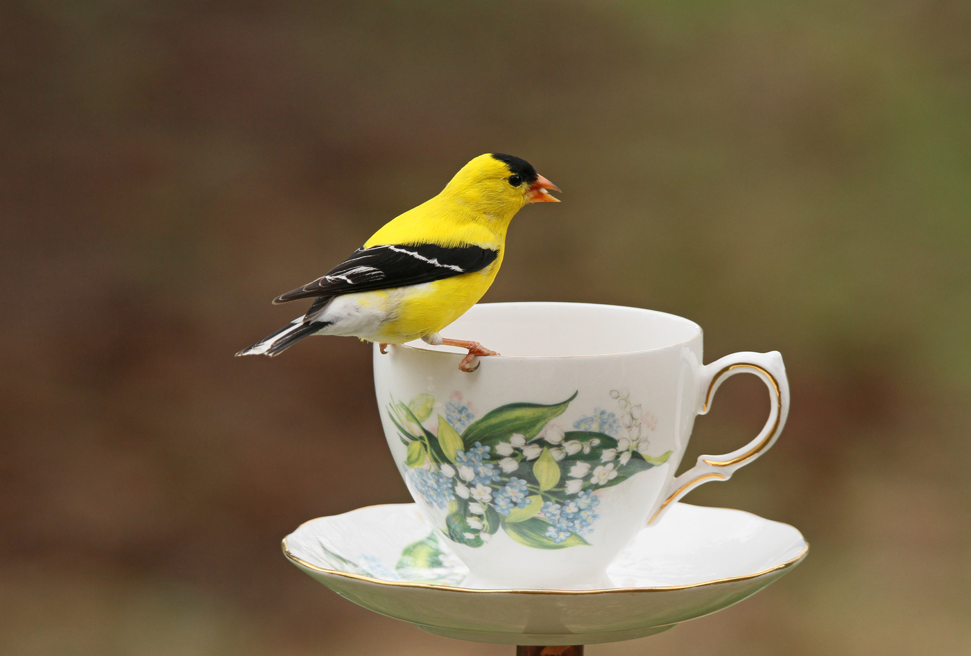 Goldfinch Teacup #9