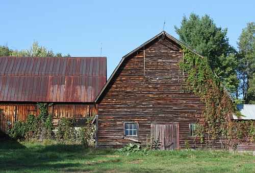 Barn with Vines #2
