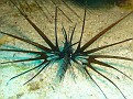 Unusual Lionfish