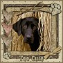 dcd-Too Cute-In The Hay
