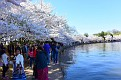 CherryBlossomFest APR2015 664