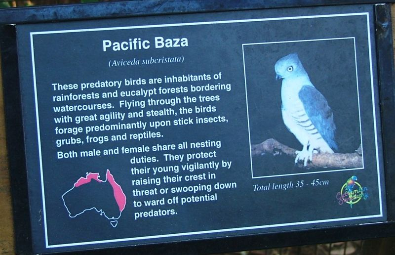 Pacific Baza plaque
