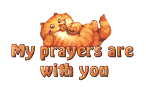 My prayers are with you - SpringKitty