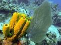 Grand_Cayman-34.jpg
