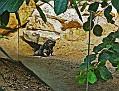 Прага Зоопарк Zoo Prag DSC8823 140 3