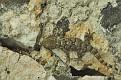 Гаэта Италия Геккон Gaeta Italy Gecko DSC3846 1