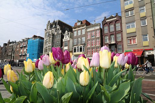 Tulips from Amsterdam 2018 April (2)