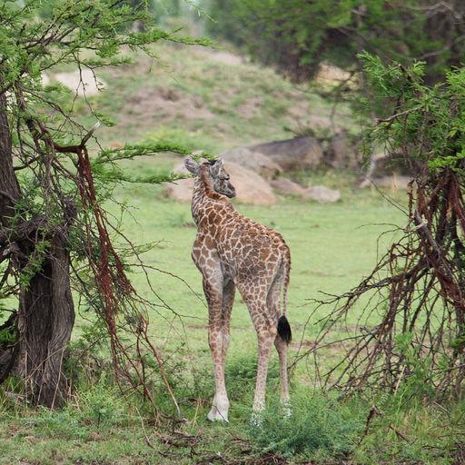 Tanzania 328.jpg