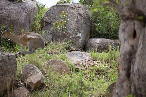 Tanzania 429.jpg