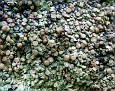 Lichen  (2)