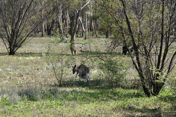Warrumbungle National Park (45)