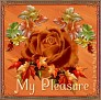 fallrose-mypleasure