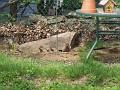 2007 May 18th 021