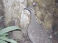 2007 Toledo Zoo 035