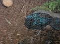 2007 Toledo Zoo 050