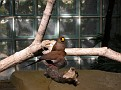 2007 Toledo Zoo 052