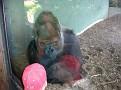 2007 Toledo Zoo 058