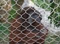 LA Zoo 029