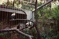 1993 Bronx Zoo 14556
