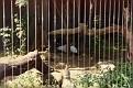 1993 Bronx Zoo 14560