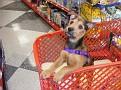 Ahsoka Goes Shopping at Petco