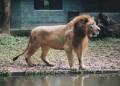 KL Zoo 012
