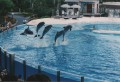 Sea World 003
