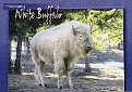 07- WY State Animal