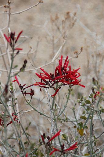 red blooming flower