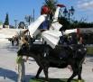 Cow parade Greece 2006 (4)