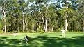 2011 10 11 09 Nelson Bay Golf Club