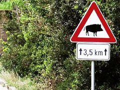 Achtung Wildschweine