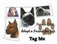 dcd-Tag Me-Adopt a Friend.jpg