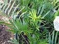 Plants Names DX7 139