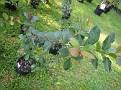 Plants Names DX7 151