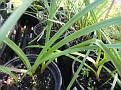 Plants Names DX7 182