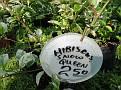 Plants Names DX7 207