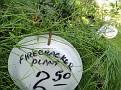 Plants Names DX7 221