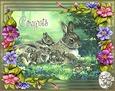 Bunny_love_congrats_ma1.gif