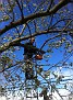 "Photo from Oct 31, 2012 / Trimming up the ""Halloween' Tree..."