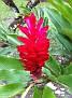 Natural Vegetation / near Lanquin, Guatemala.