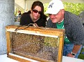 "Jersey Cape Beekeepers Association ""Bee Booth""..."